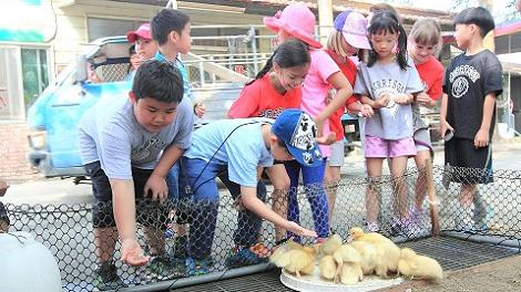 台南-台南鴨莊休閒農場一日遊