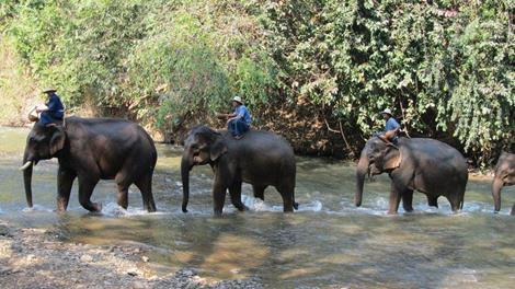 【清邁假期】泰北小城故事、叢林騎象、夜間動物園、蘭娜古城五日(含稅)