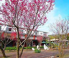 櫻花渡假會館