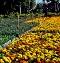 田尾公路花園